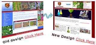 website redesigner chennai